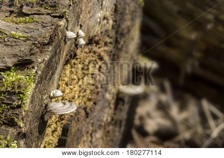 Close-up View Of Wood Mushrooms And Rest Of Trees