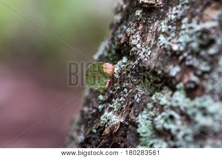 Ant carrying leaves on the tree. Nature of ants.