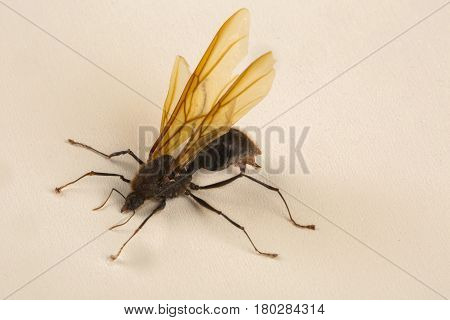 Queen Ant Winged Ant. Nature of ants.