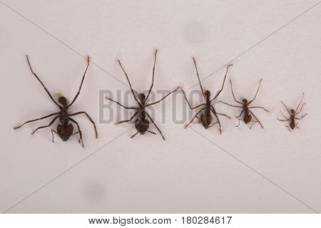 Various species of ants on white background