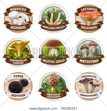 set of mushroom logos, stickers, made in a realistic style. Can be used for packing