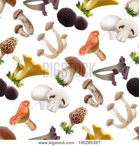 seamless pattern of various kind of edible mushrooms. Realistic style