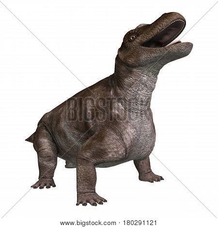 3D Rendering Dinosaur Keratocephalus On White