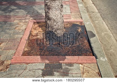 Used motor oil is poured into the ground around foot of tree. Black spot is contaminated the surrounding area in sidewalk. Environmental pollution concept