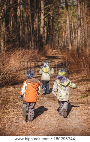 Group of three little kids running in the forest. Early spring pine forest hike in waldorf kindergarten.