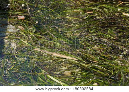a pollution and sea weed on water