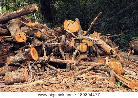 Pile of logs. Forest industry and construction raw material.