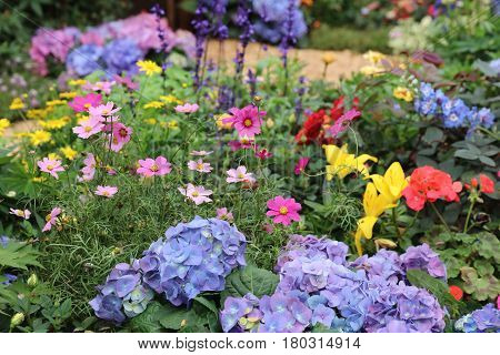 Perennial  Garden Flower Bed In Spring