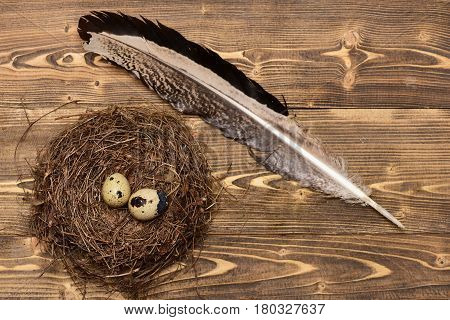 Quail Eggs In Nest With Writing Feather, Easter