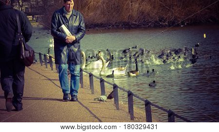 London UK - February 25 2016: man walking by the Lake at St James's Park London towards Whitehall looking at the ducks.