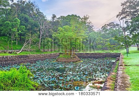 The Moat With Lotus Flowers