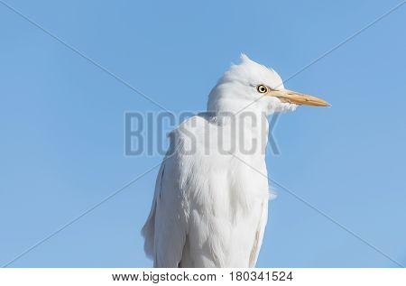 Cute Wild Bird With White Feathers