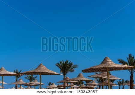 tropical green palm trees with evergreen leaves and wicker umbrellas parasols or sunshades on bright sunny day on idyllic blue sky background. Summer vacation in paradise copy space