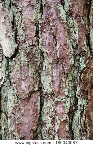 Close up view of old gnarled tree bark