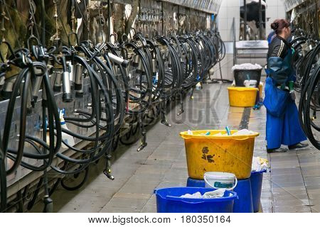 Cow milking automatic system in the milk farm.