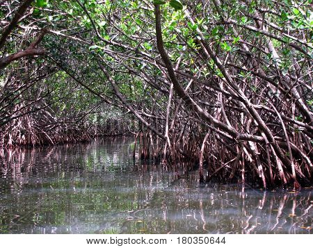 Calm water way through the mangroves of Thousand Island Park in Cocoa Beach, Florida