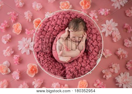 Nine day old newborn baby girl sleeping in a wire basket. Shot in the studio on a pink background that's been strewn with flowers.