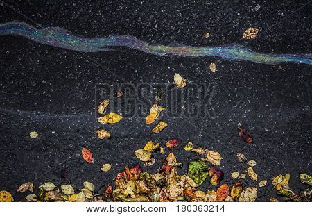 Brilliant iridescent rivulet from oil or gasoline on a asphalt road with withered foliage, ecological issues