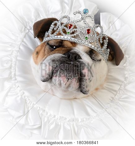 spoiled female dog wearing tiara
