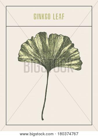 High detailed vector illustration of a ginkgo leaf, hand drawn, sketch