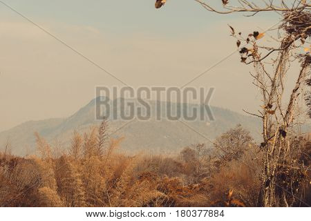 Sky Above The Trees In The Forest With Mountain Background In Vintage Tone.
