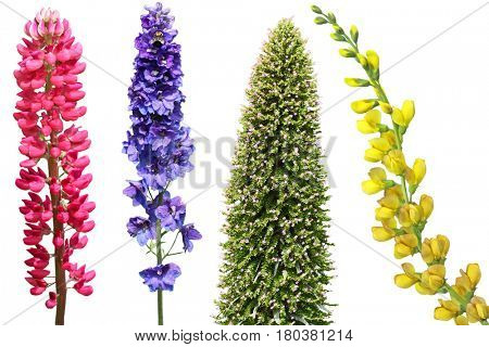 Herbaceous perennial flower set isolated on white background