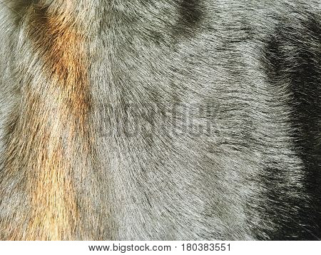 Fabric Textile Close Up of Black and Brown Cowhide or Fragment of Skin A Cow Texture Background.
