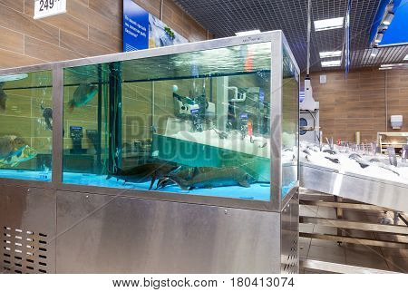 Samara Russia - January 2 2017: Live fish ready for sale in the supermarket Lenta. One of largest retailer in Russia