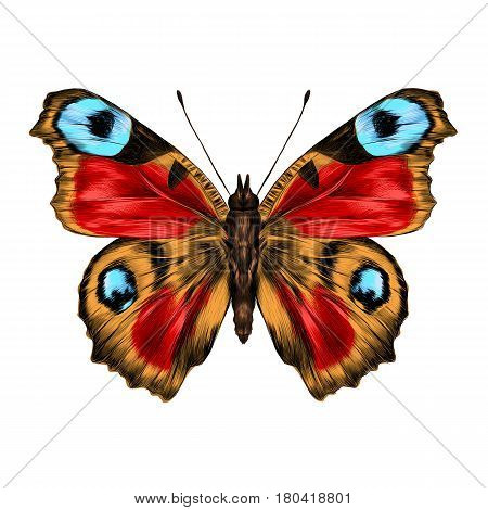 butterfly with open wings top view the symmetrical drawing graphics sketch vector color image wings of red yellow and blue colors