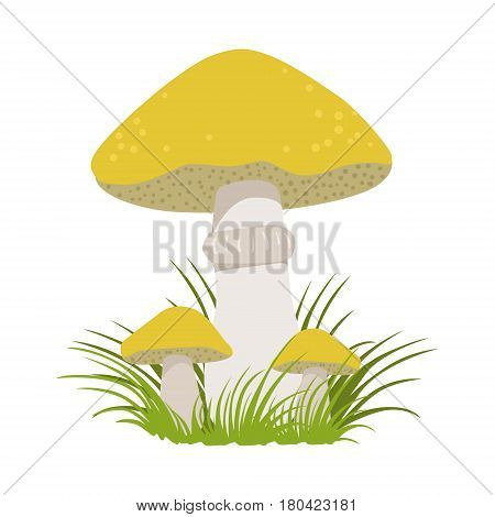 Slippery jack, suillus luteus, edible forest mushrooms. Colorful cartoon illustration isolated on a white background