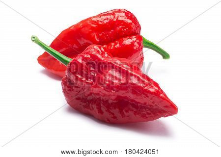 Bhut Jolokia Ghost Peppers, Paths