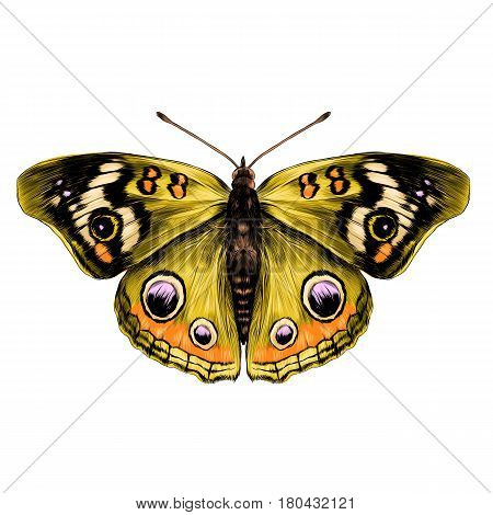 butterfly with open wings top view of symmetry sketch the graph of vector color drawing butterfly with yellow wings