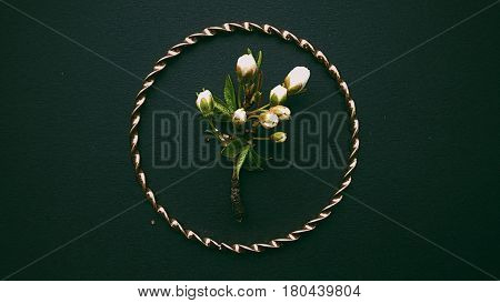Sprig in round frame, beautiful twig, tree stick, Processed with VSCO with 6 preset