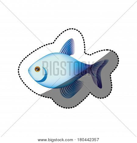 sticker colorful fish aquatic animal icon vector illustration