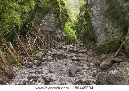 Cracow gorge - the most beautiful rock gorge of Polish Western Tatra mountains.