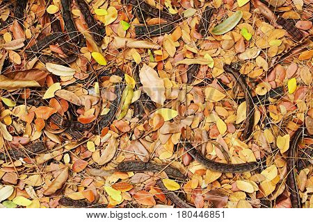 Falling dried leaves abstract background. Golden dried leaves falling on floor