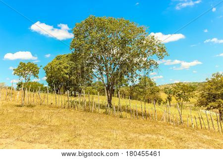 Tree With Blue Sky, Fence And White Puffy Clouds On A Dry Land Desert Outback Landscape Of Brazil -