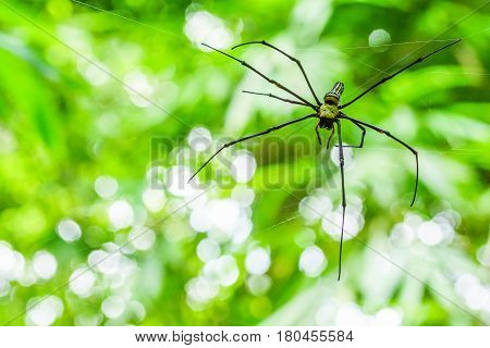 Spider with its web in national park of Thailand