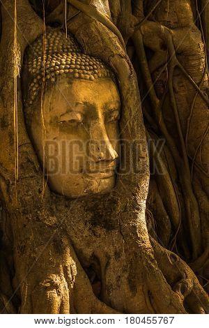 Head of Buddha image surrouned by tree at Mahathat temple Ayuthaya Thailand