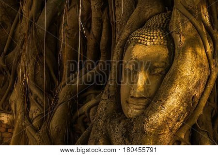 Head of Buddha image surrouned by tree in Mahathat temple Ayuthaya Thailand.