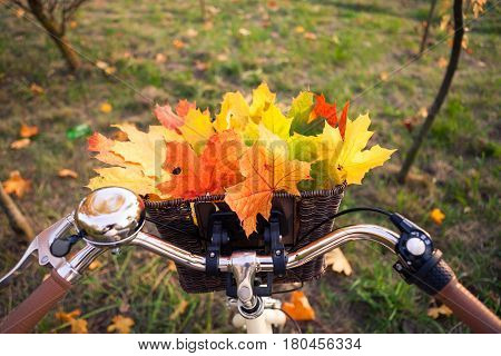 Close up perspective view of bicycle braided basket with orange, yellow and green leaves bouquet, fall background