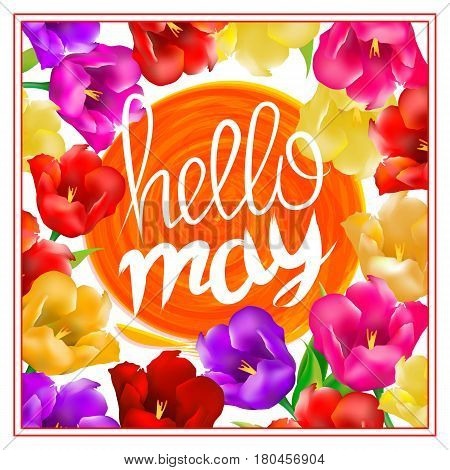 Hello May Hand Lettering With Tulip Flower. Vector Illustration Eps10