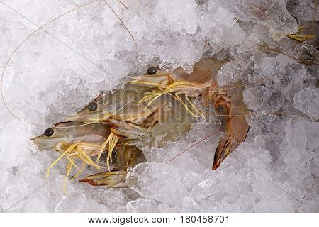 Fresh Whiteleg Shrimp, Pacific White Shrimp On Ice