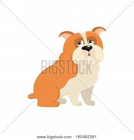 Cute English bulldog dog character, cartoon vector illustration isolated on white background. Funny sitting English bulldog dog character, colorful cartoon illustration