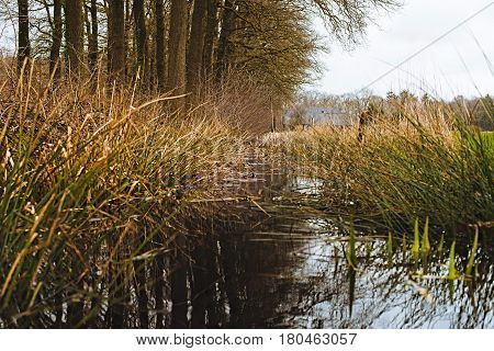 Ditch With Tall Grasses Along Row Of Trees. Low Angle View.