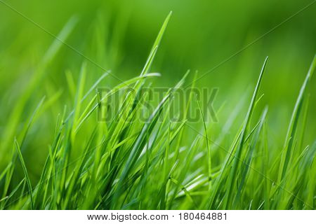 Beautiful summertime landscape with greenery colors plants. Grass field textured background, macro view. energy concept soft focus