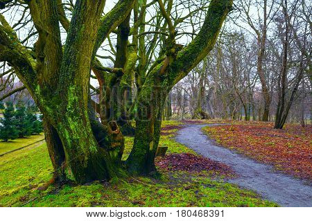 fabulous landscape - large trees covered with moss, the path, the fallen leaves. Background nature