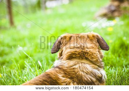 Dog in grass. Dog close up. Dog in nature