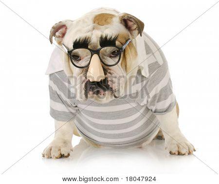funny dog - english bulldog wearing groucho marx glasses with sulking expression
