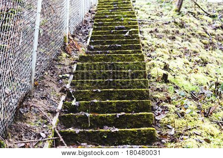 Concrete stairs covered in green moss. The stairwell looks very old and unused. A chainlink fence runs up along the side of the stairwell.